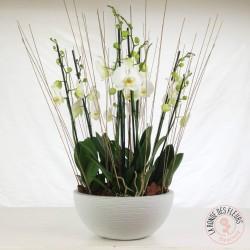 coupe d'orchidées blanches la ronde des fleurs