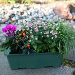 jardiniere de plantes toussaint rennes cimetiere de l'est