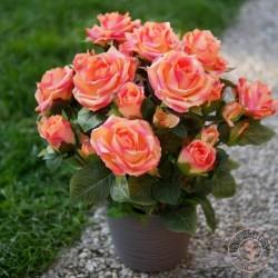 composition roses artificielles
