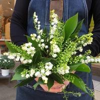 Les petits bouquets de bonheur sont prêts!  #1ermai #muguet #rennes #fleuristerennes #fleurs #fleur #bouquetchampetre #bonheur #larondedesfleurs_rennes