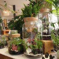 De jolis terrariums sont à adopter à  la boutique! Nous vous donnons tous les conseils pour en prendre soin! Un peu de vert a la maison, c est bien non?  #terrarium #rennes #fleuristerennes #larondedesfleurs_rennes #green #greenaddict #plantesvertes #fleuriste