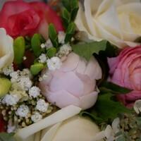 La pivoine française est un must à cette saison!!! Fleurir vos mariages en mai et juin permettent d'agrémenter vos bouquets de ces fleurs si romantiques!  #pivoines #fleursdesaison #fleursdeprintemps #fleurslocales #mariage #bretagne #rennes #fleuristemariage #fleuriste-rennes #larondedesfleurs_rennes